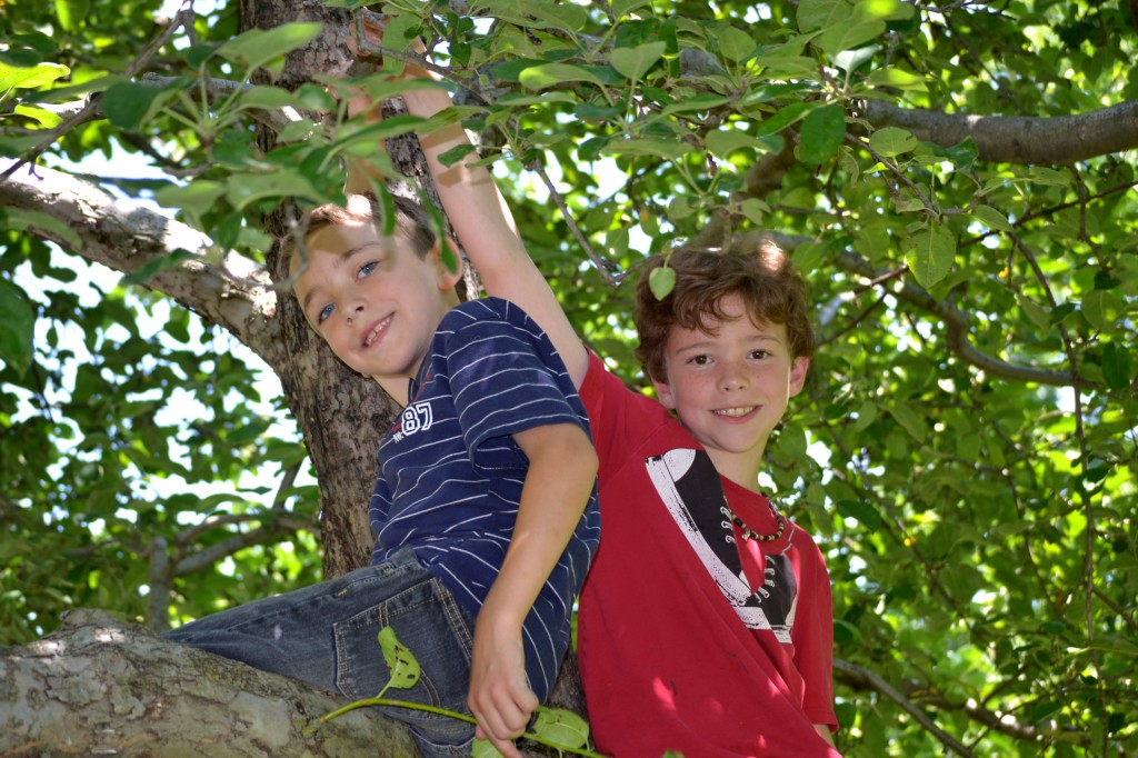 morgan & evan climbing trees